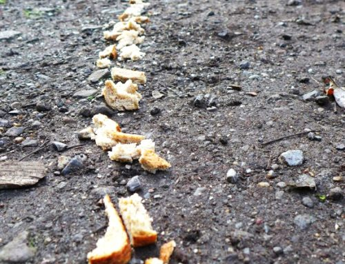 Finding Breadcrumbs